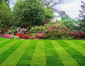 Как выбрать газонную траву?