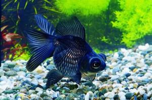 Советы по выбору аквариумного грунта