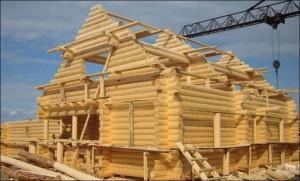 Выбираем древесину правильно