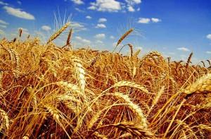 Зерносушильное оборудование в каждом поле